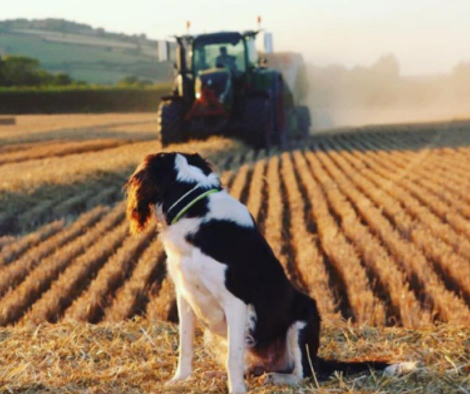 Dog watching a farmer in his tractor_59470