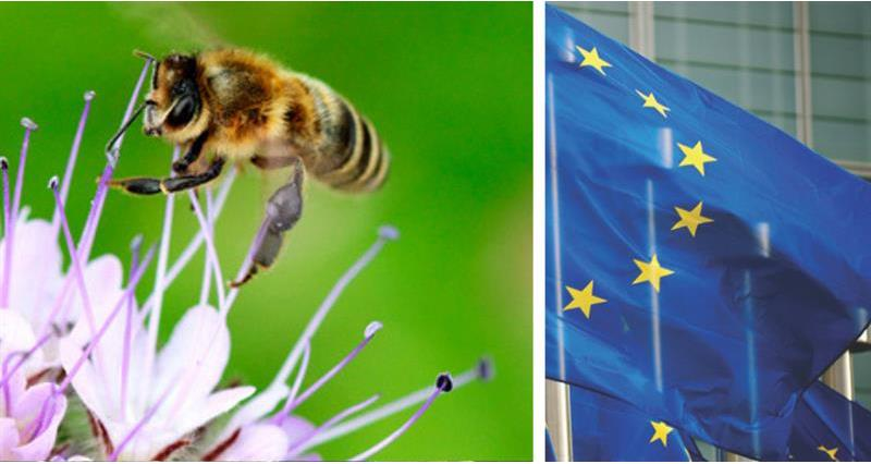 European Food Safety Authority (EFSA) published its draft Bee Guidance Document_65987