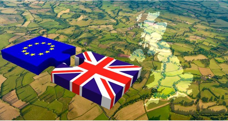 Preparing for Brexit: Updated guidance for horticultural businesses