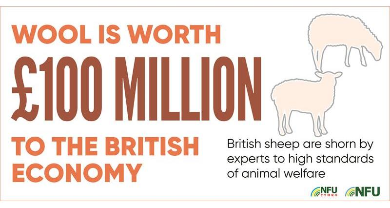 Livestock and the value of wool infographic_71229