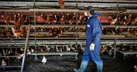 NFU member Phil Ashton in his poultry house_73358