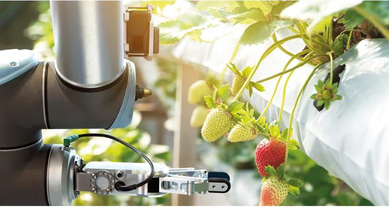A robot picking fruit_70087