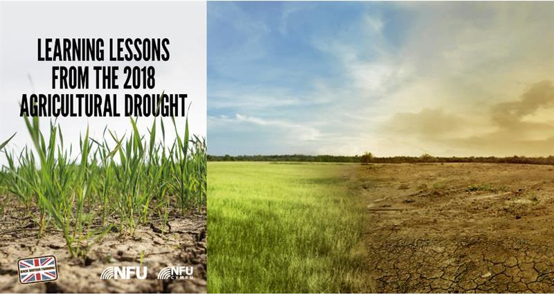 Learning lessons from the 2018 agricultural drought_58898