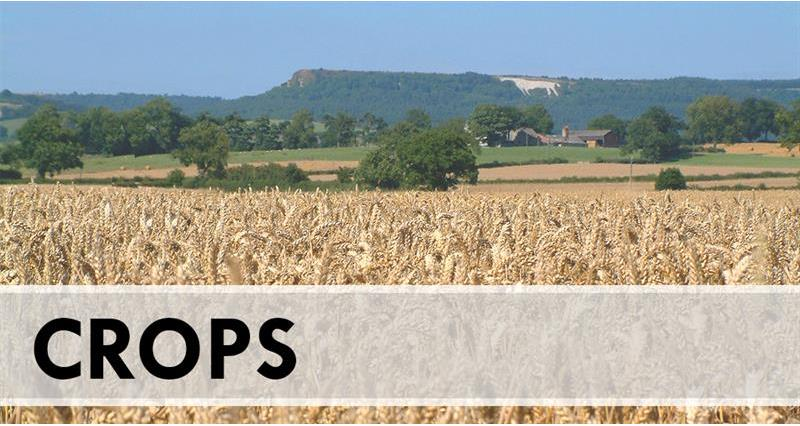 Crops: How you can prepare for a no-deal Brexit