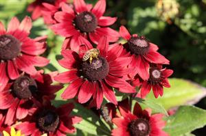 Summer flowers and pollinators_66351
