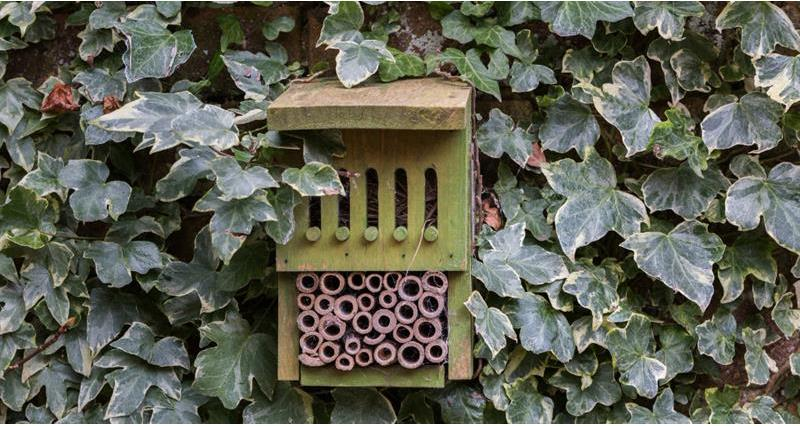 insect box_59014