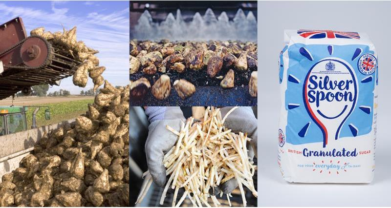 sugar beet process_50648