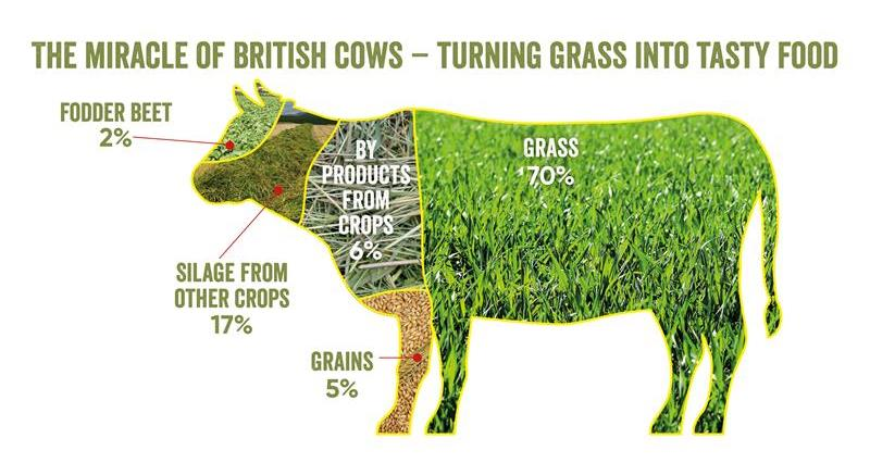 Cattle feed infographic_69617