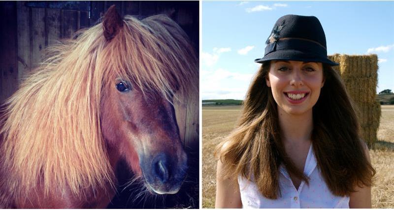 Melissa Volpi - Shetland ponies_59151