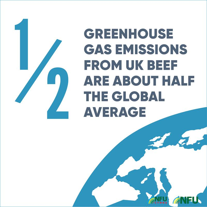Livestock and climate change infographic showing that greenhouse gas emissions from UK beef are about half the global average