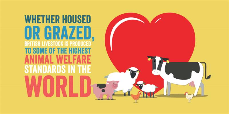 Animal health and welfare infographic_61320