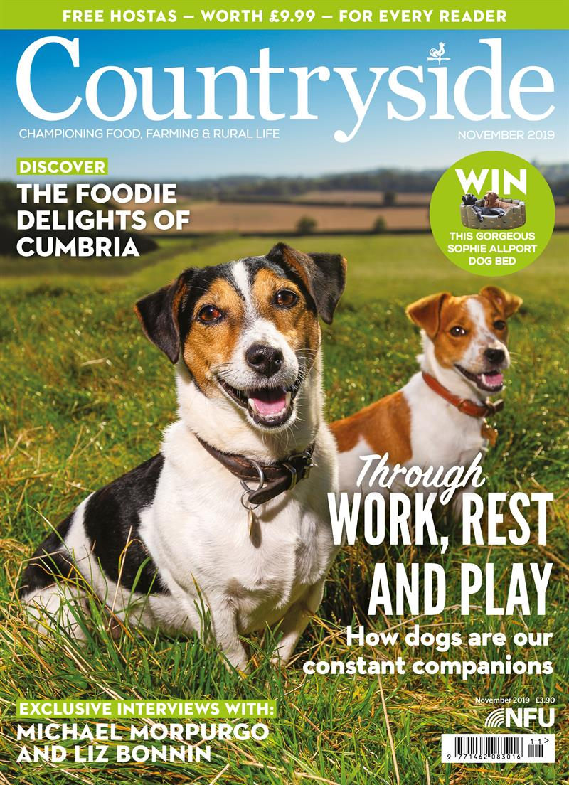 Countryside cover - November 2019_69540