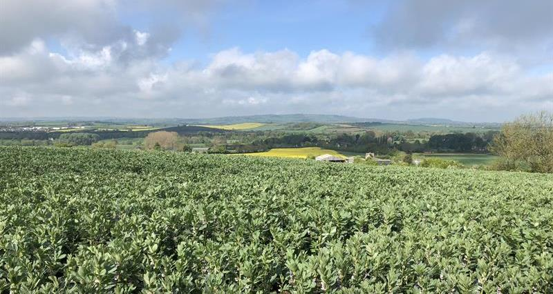 arable landscape Warwicksire