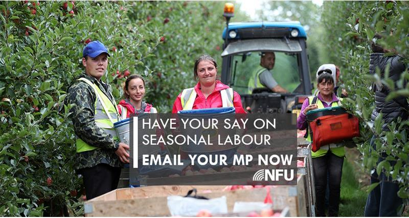Email your MP now on seasonal labour