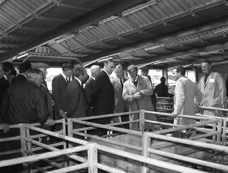 Fred Peart opens Ipswich Cattle Market in 1965_73519