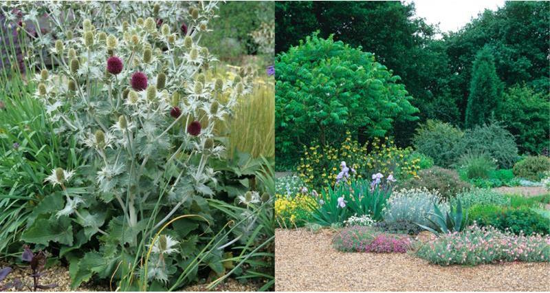 Gravel garden_59000