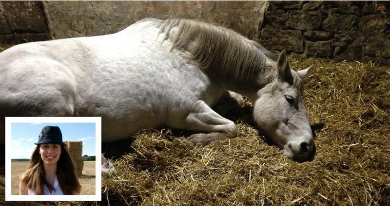 Melissa Volpi's horse Zara_58961