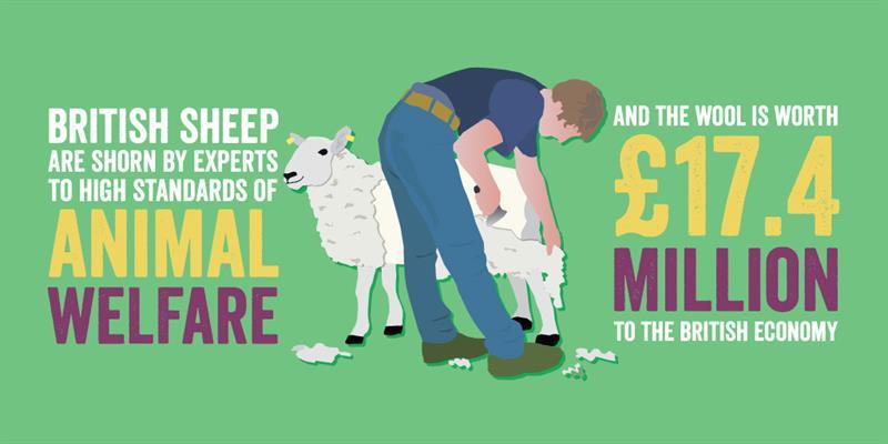 Animal health and welfare infographic - sheep wool_61319