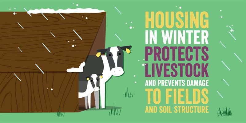 livestock housing infographic_61424