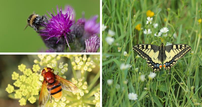 pollinators_55431