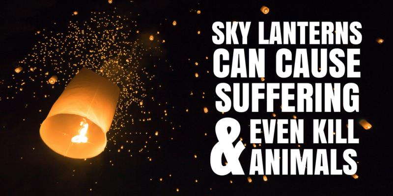 Campaigning for you: Ban sky lanterns