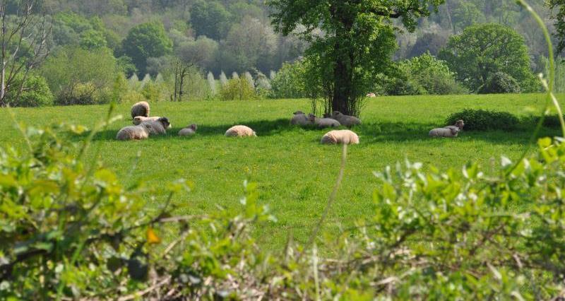 Sheep in field_34488