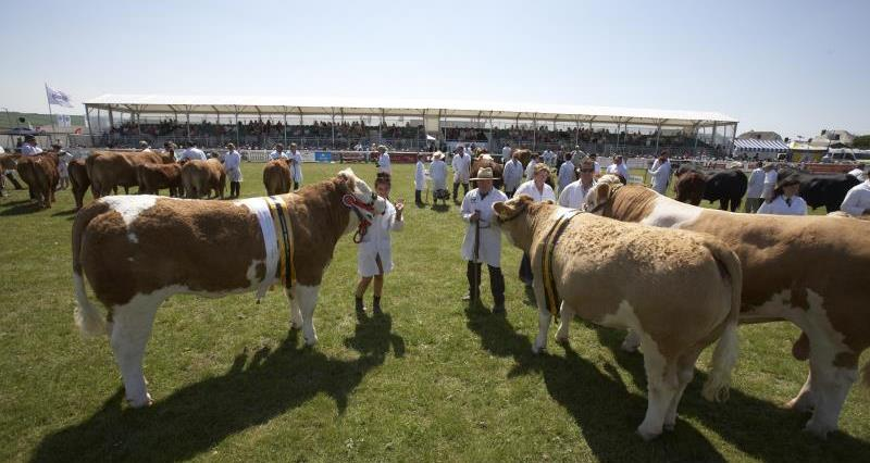 Grand Parade of cattle at Royal Cornwall Show_22528