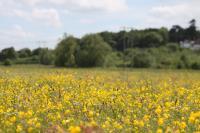 Lugg meadow (c) Plantlife-Chris Harris_20631