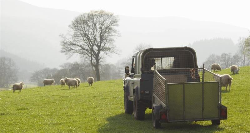 Livestock theft the most costly crime for farmers, new figures reveal