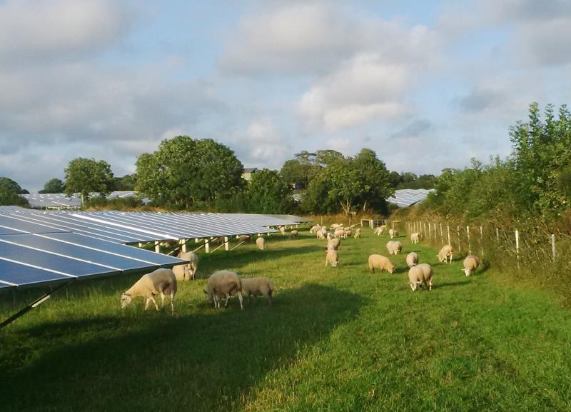 Clare Morgan Solar panels_38678