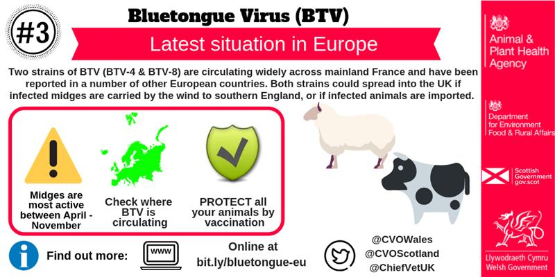 Bluetongue virus, latest situation_65140
