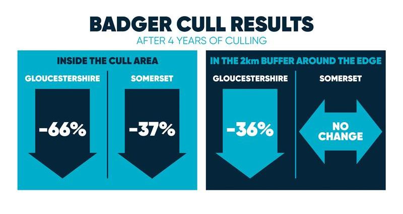 English badger cull results_69523
