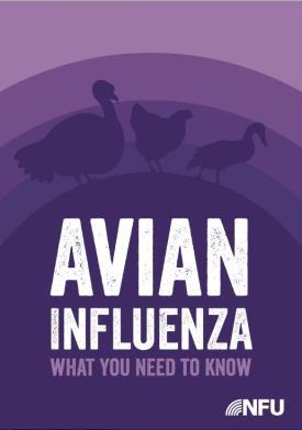 Avian Influenza_39441