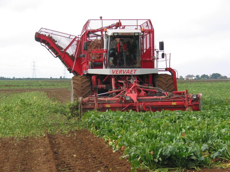 Sugar beet harvesting_13394