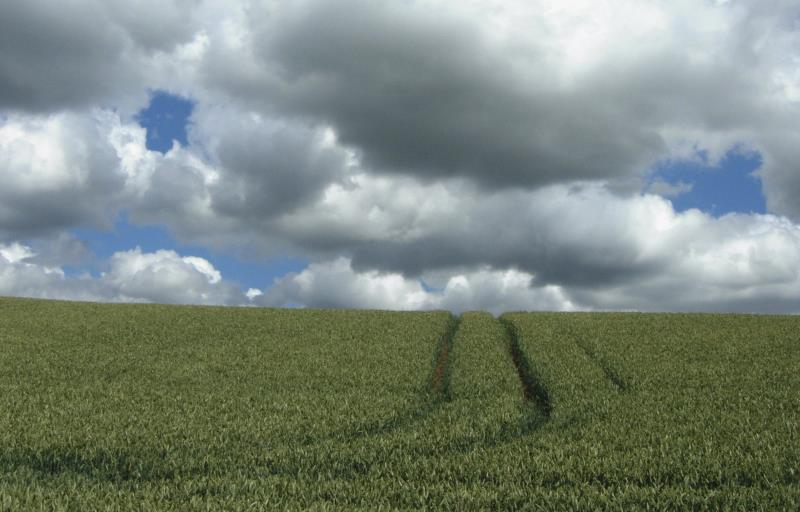 Wheat crop and tramlines, Lincolnshire_19728