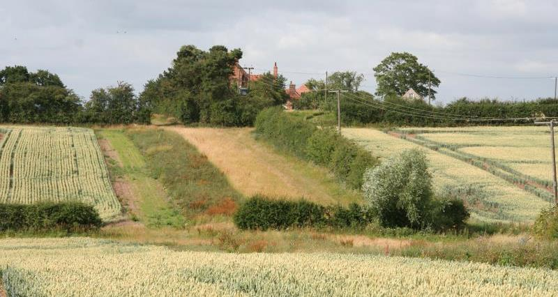 Field margins, Nottinghamshire_19729