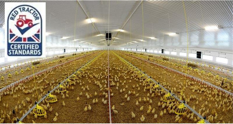 Information on the Red Tractor derogation on windows in poultry sheds