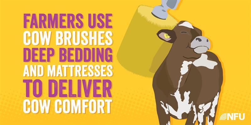 Dairy Infographic Cow Comfort _65301