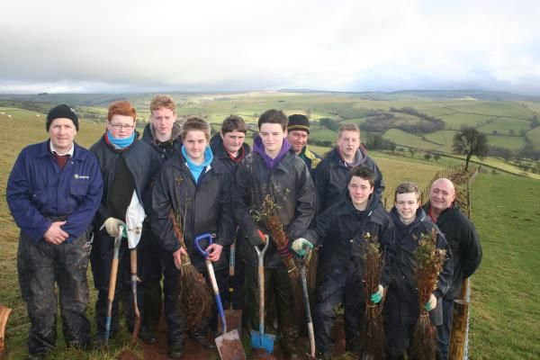 Tree Planting at Pentre_39862