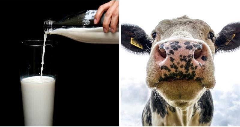 NFU Cymru Dairy_73119