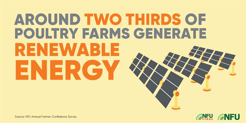 Two thirds of poultry farms generate renewable energy infographic_72558