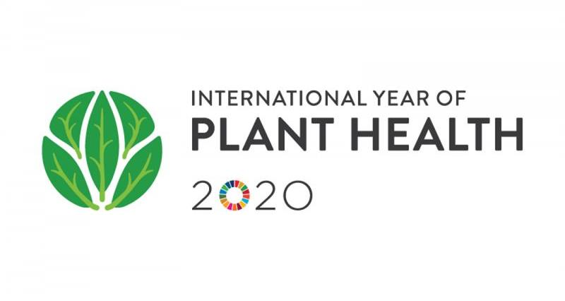 IYPH: a UN initiative