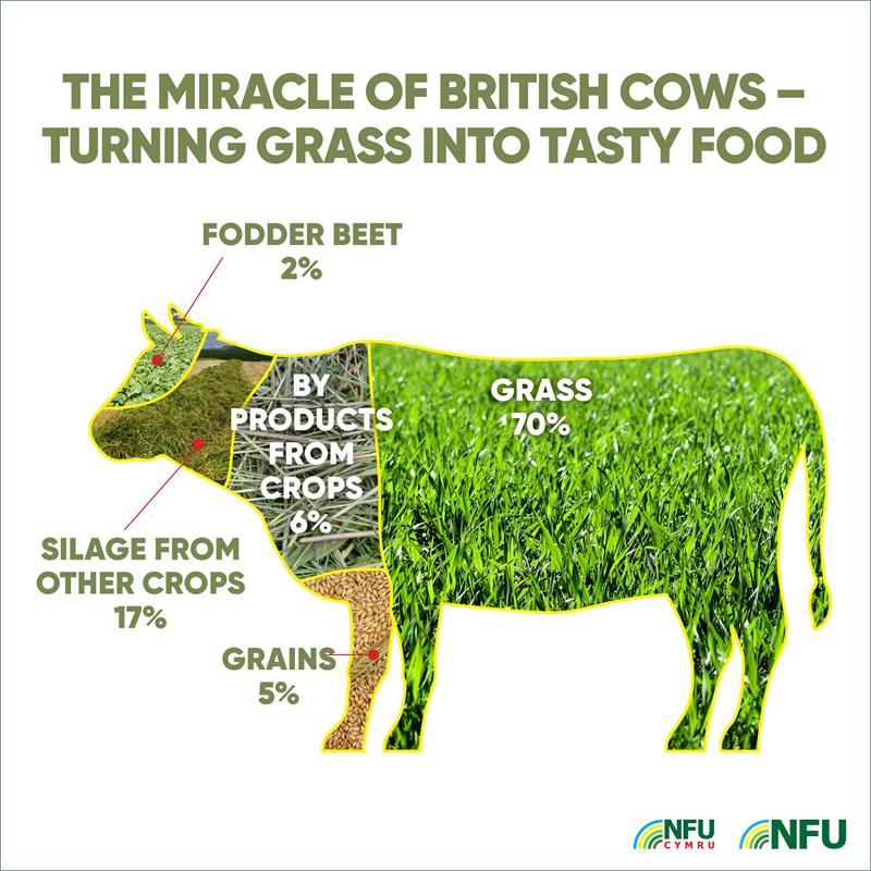 Instagram miracle of British cows infographic_70701