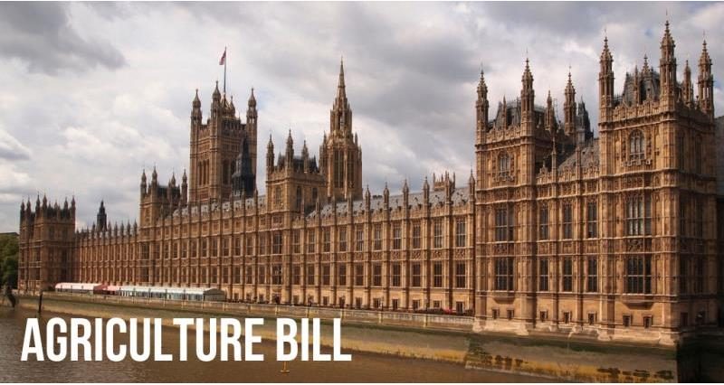 Agriculture Bill: Ask your MP to support key amendments