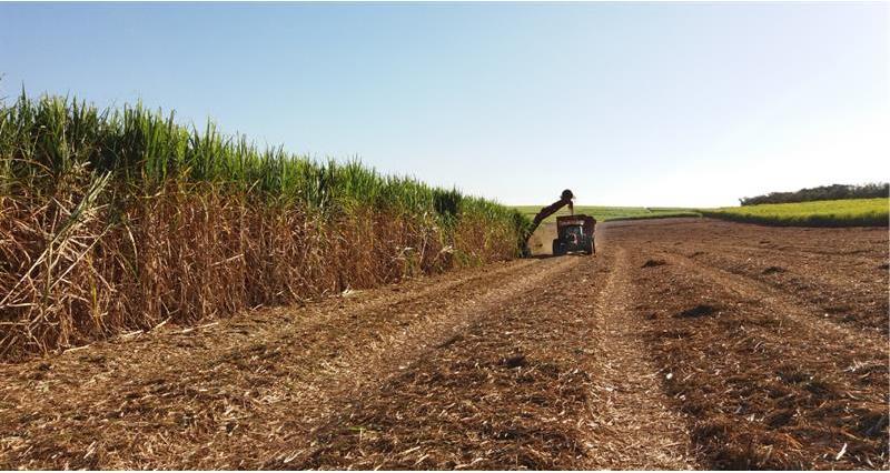 NFU Sugar position on new raw sugar Autonomous Tariff Quota