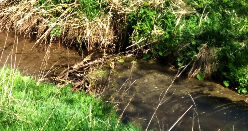 scotland eurasian beaver dam web crop_43878
