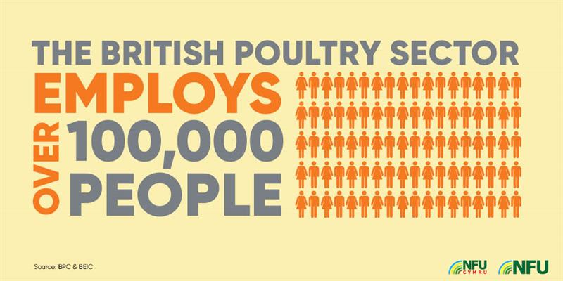 British poultry sector employs 100,000 people infographic_72230