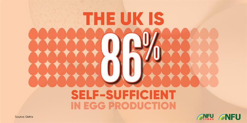 UK 86% self-sufficient in egg production infographic_72222