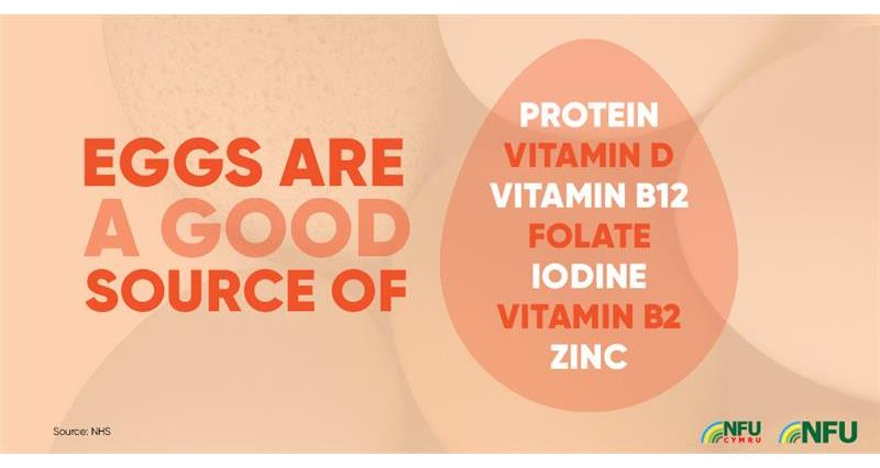 Eggs source of vitamins and minerals infographic_72223