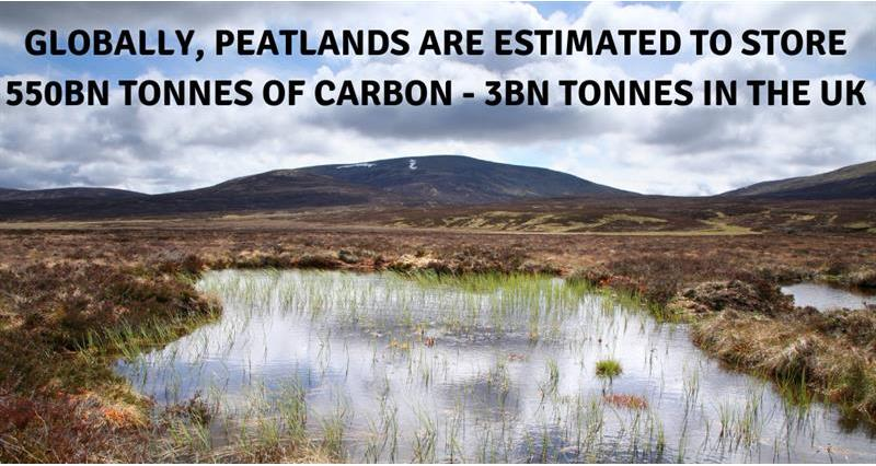 Peatlands carbon store Canva_67351